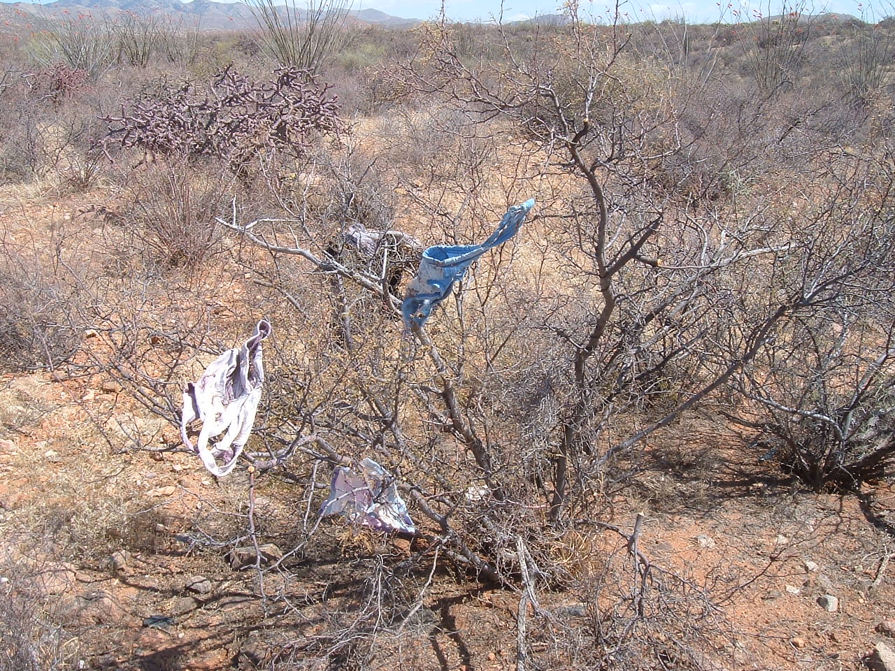 'RAPE TREES' COMMON ALONG IMMIGRANT SMUGGLING ROUTE | AZ ...